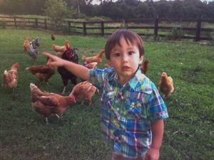 Landen with chickens
