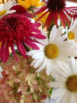 Flowers - July 27 2