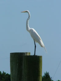 Bird_in_beaufort_2