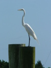 Bird_in_beaufort_2_1