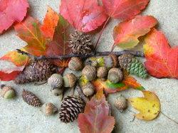 Fall_stuff_1