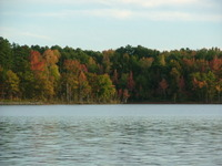 Fall_trees_2